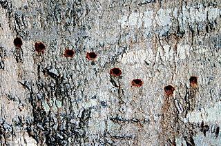 Tree B2