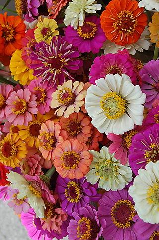 B Flowers 2