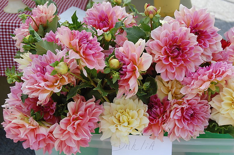 B Flowers 1