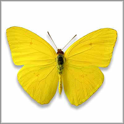 Butterfly_18_400px