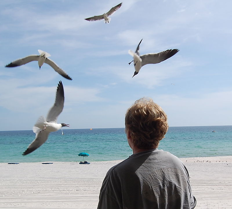 Suze and Seagulls