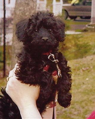 Sophie 4