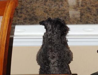 Sophie at window