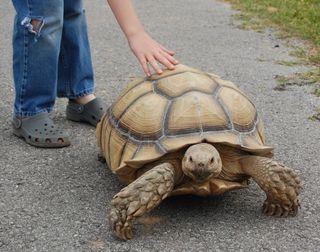 Tortoise X