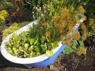 Bath tub planter