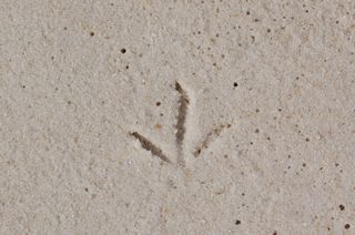 Beach Patterns 4