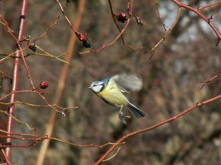 Flying_bird