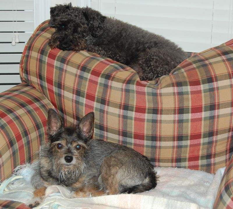Daisy and the Black Dog