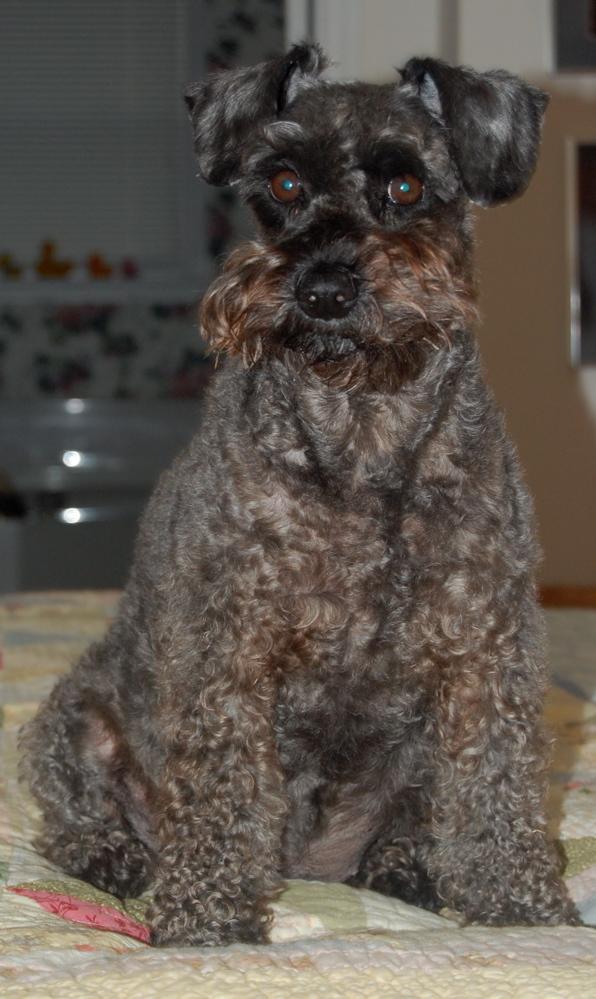 A Sophie