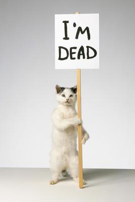 Shrig-im-dead-cat_2-thumb-300x447