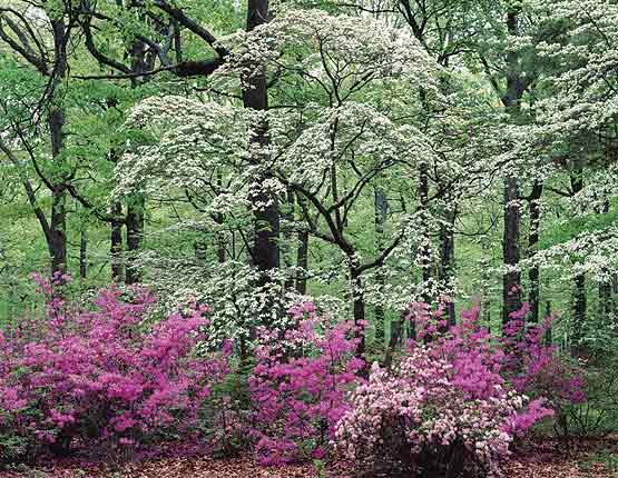 Spring_trees[1]