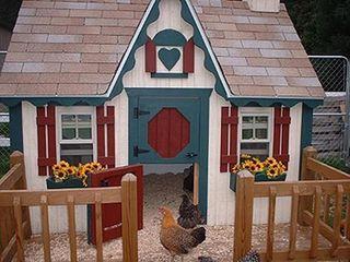 Chicken-coop-2