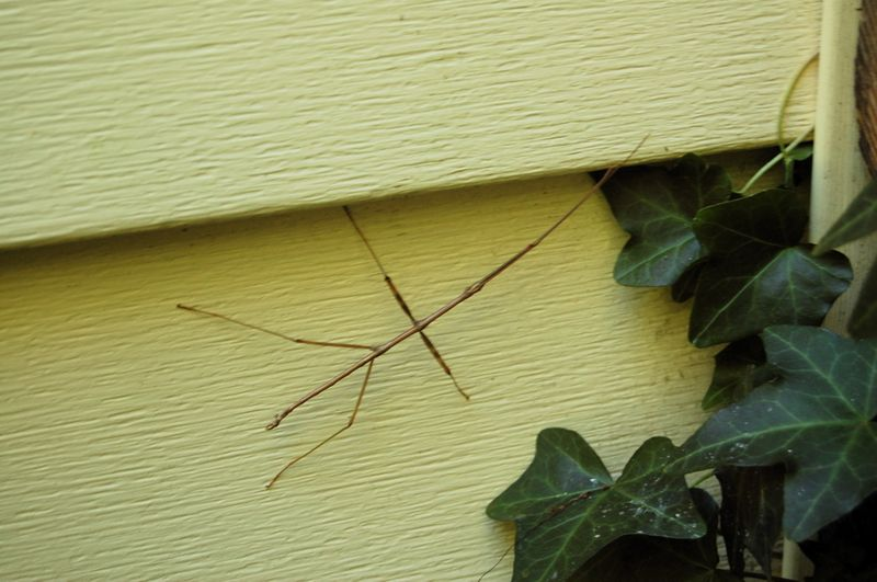 Walking stick 2
