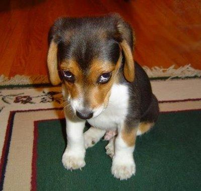 Puppy_pleads_guilty