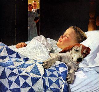Sleeping-dog-2