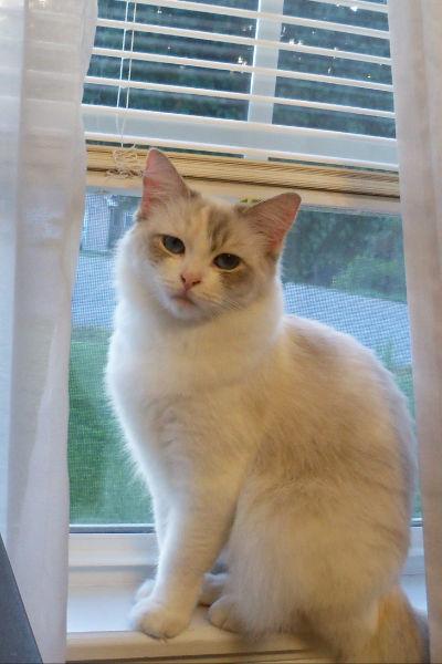 Thurs Brita's cat annie