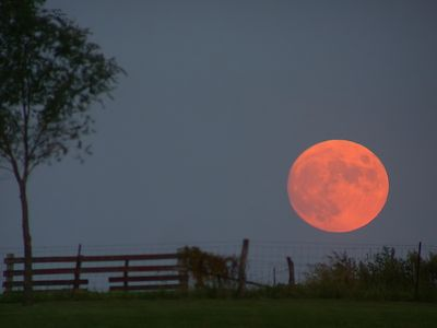 Did you see that Harvest Moon last night?