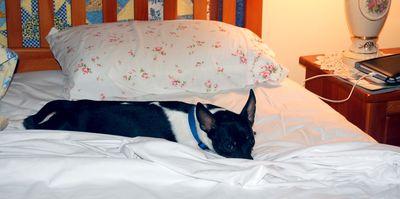 Skipper:Pillow3