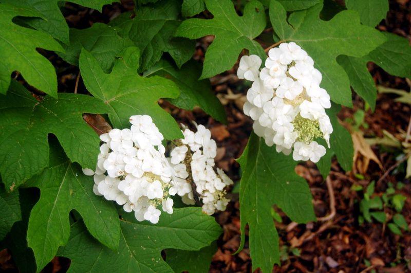 Backyard Bloomers 2