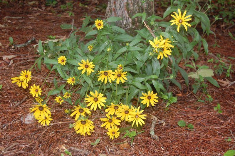 Backyard bloomers 1