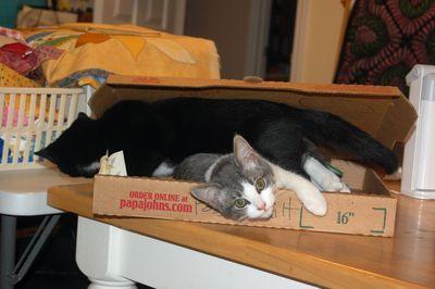CatPizza2
