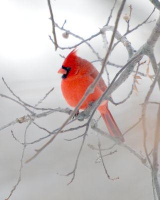 Cardinalfromap