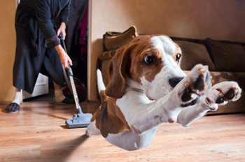 Post_fix_fear_of_vacuum_cleaner_in_dogs