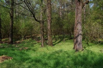 Hobbit_woods_2